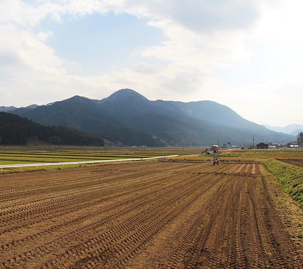 鳥取のおいしい有機野菜 TREE&NORF 33番圃場