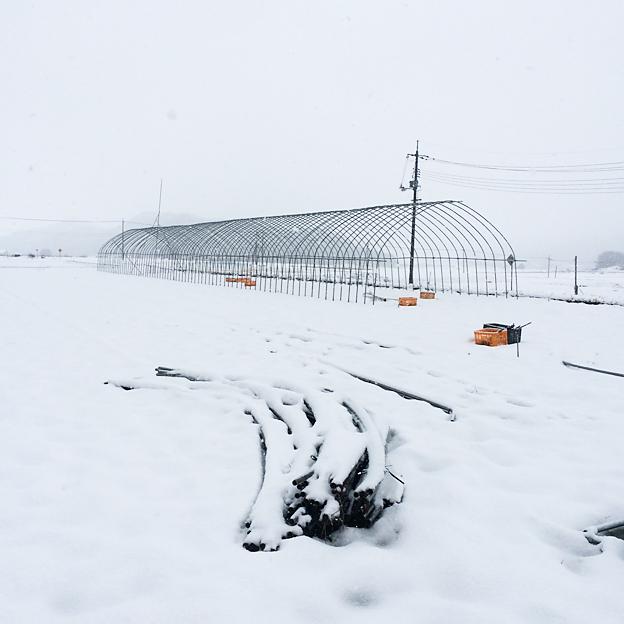 鳥取のおいしい有機野菜TREE&NORF / 今冬の収穫と出荷が終了しました