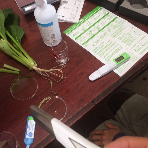 鳥取のおいしい有機野菜 TREE&NORF 小松菜の出荷、間も無く!