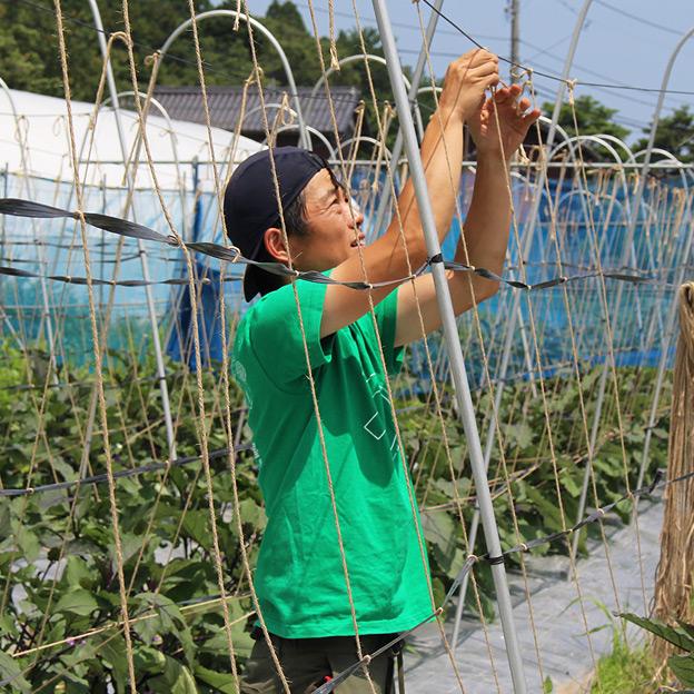 鳥取のおいしい有機野菜 TREE&NORF 千両なすの追肥と誘引