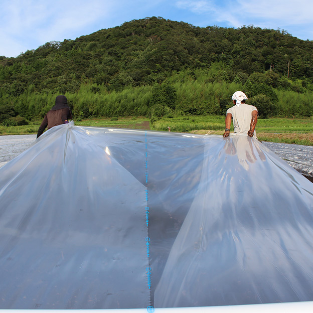 鳥取のおいしい野菜 TREE&NORF 秋に向けての土壌改良作業 太陽熱養生処理