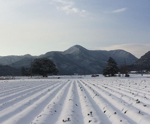 鳥取のおいしい野菜 TREE&NORF 鳥取市気高町の大タブの木