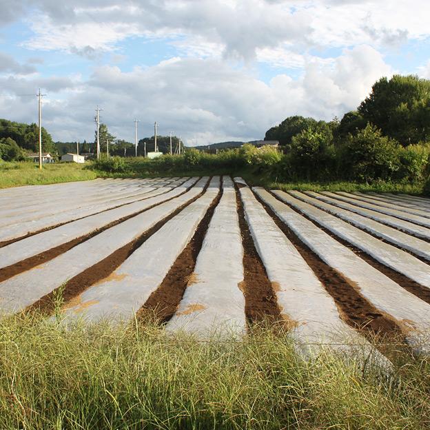 鳥取のおいしい野菜 TREE&NORF/佐久ゆうきの会(長野県佐久地方)を視察訪問