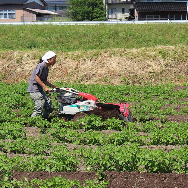 鳥取のおいしい有機野菜 TREE&NORF / 本当に儲かる農業を目指す。BLOF理論による野菜栽培 / 2016年 じゃがいも栽培-経過報告 3〜5月