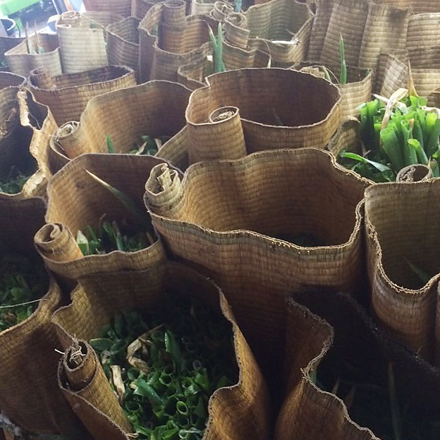 鳥取のおいしい有機野菜TREE&NORF/週明け分の白ねぎも収穫