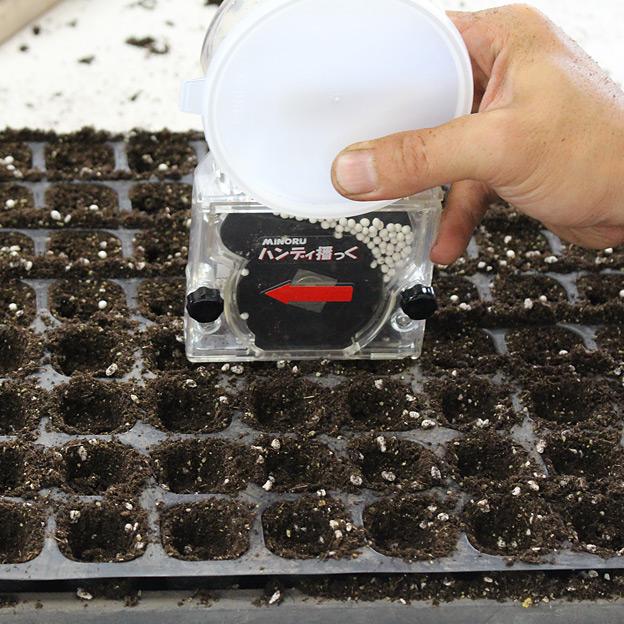 鳥取のおいしい野菜 TREE&NORF キャベツとレタスの栽培を開始!播種