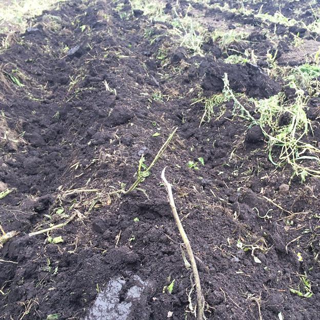 鳥取のおいしい野菜 TREE&NORF 秋に向けての土壌改良作業 プラソイラで心土耕