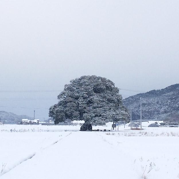 鳥取のおいしい有機野菜TREE&NORF/大タブの木