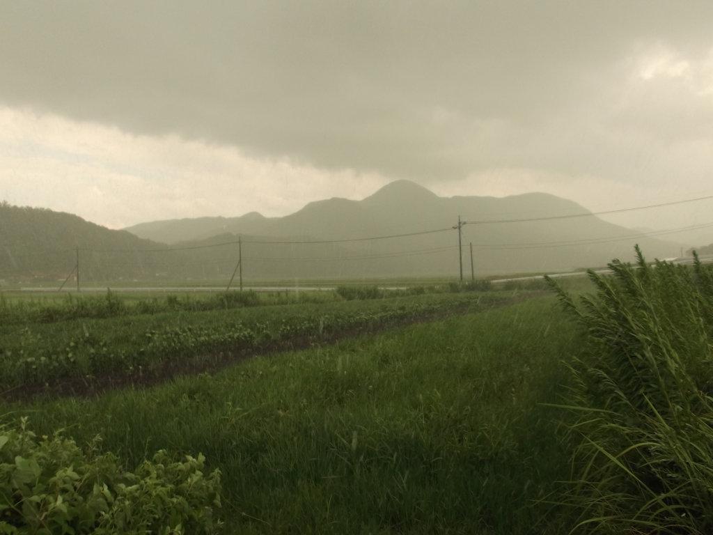 鳥取のおいしい野菜 TREE&NORF/待望の雨
