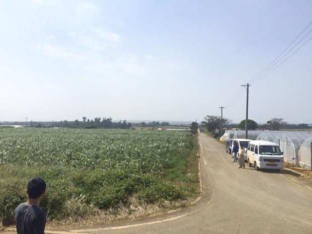 宮古サトウキビ畑