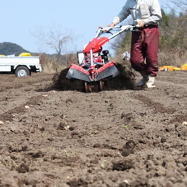 管理機で土をメークインに土を被せる/TREE&NORF