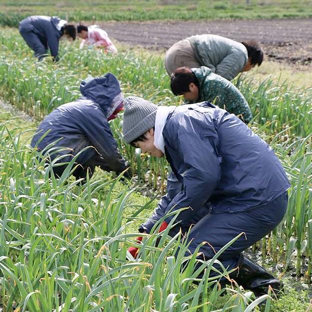 鳥取の野菜TREE&NORF/新入社員の農業研修