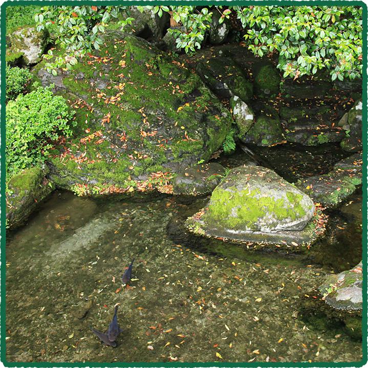 鳥取のおいしい有機野菜 TREE&NORF ほ場について「布勢の清水」