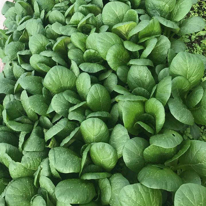 鳥取のおいしい有機野菜 TREE&NORF 私たちの栽培している野菜