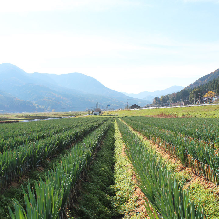 鳥取のおいしい有機野菜 TREE&NORF 私たちの畑(ほ場)