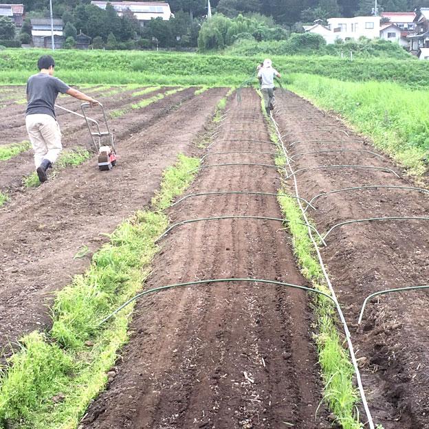 鳥取のおいしい野菜 TREE&NORF/有機小松菜