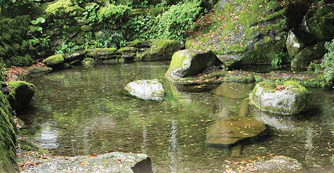鳥取のおいしい野菜 TREE&NORF/布勢の清水