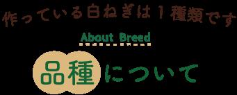 白ねぎの品種について