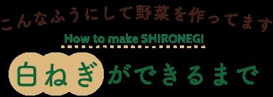 shironegi-sub-title02