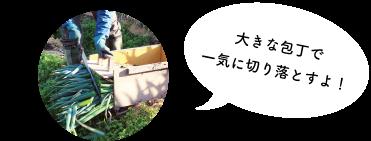 shironegi-subimg-04